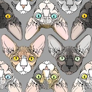 Sphynx Chevrons Realistic Colors Grey Background