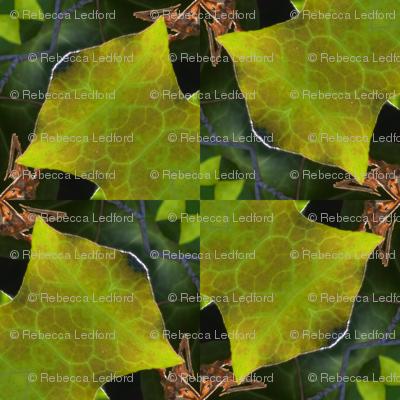 Leafy Jagged Bowties 71-101
