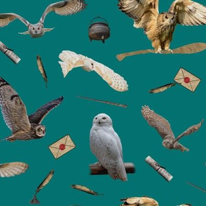 the owls on teal - small - potter's world