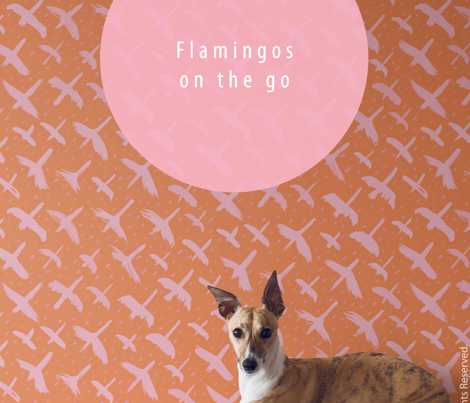 Flamingos on the move by Friztin