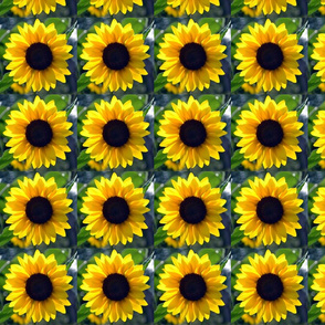 SunflowerPerfectBloom