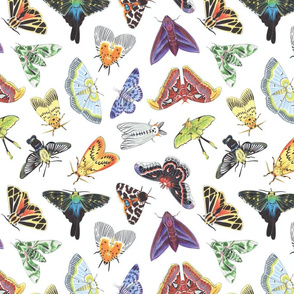 Colorful Moth Medley