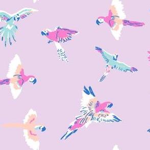 parrot lilac