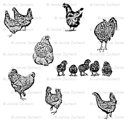 Drawn Chickens White