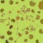 Alchemilla fresh green