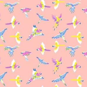 parrot_pk