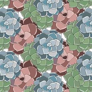 Tri-Color Succulent