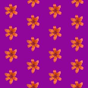 Tiger Lily on Violet