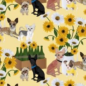 Chihuahua & Butter Daisy