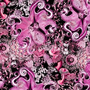 Haeckeliana Pink