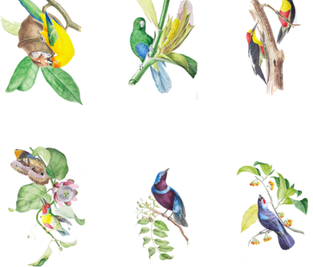 Birds of Brazil  fabric by neilepi on Spoonflower - custom fabric