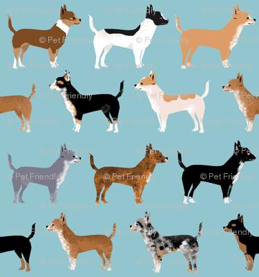 Chihuahua Coats Dog Colors Merle Black And Tan Blue