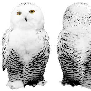snowy owl plushie 1 - potter's world
