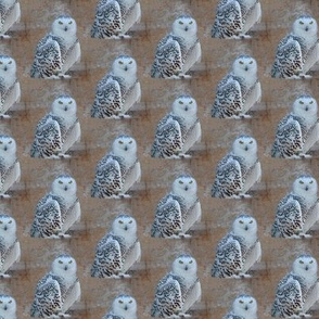 the snowy owl - small - potter's world