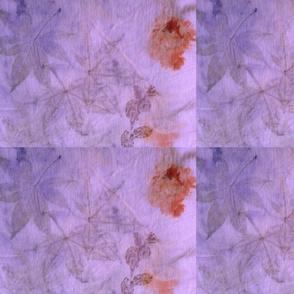 Japanese Maple Leaves Violet