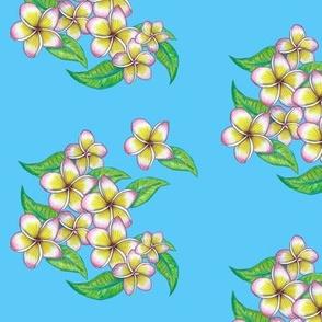 summer frangipani