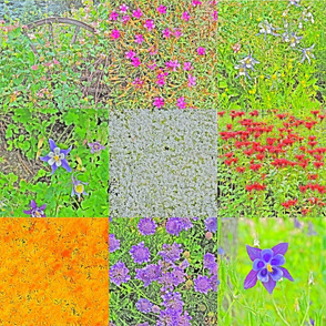 Steamboat Flowers 1 in Paint