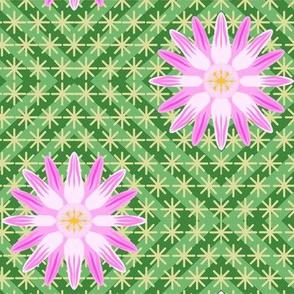 Pink Log Cabin Cactus Flower