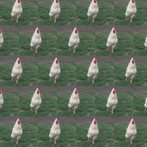 Dancing Rooster