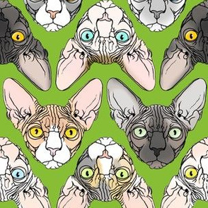 Sphynx natural colors lime green background
