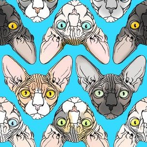 Sphynx natural colors turquoise background
