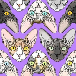 Sphynx natural colors lavender background