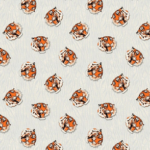 Tiger on white texture