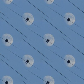birds and moon