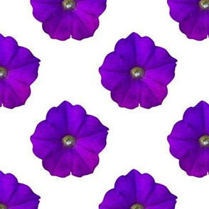 Painted Petunias