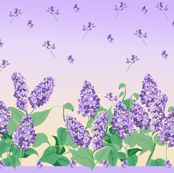 Lilac summer