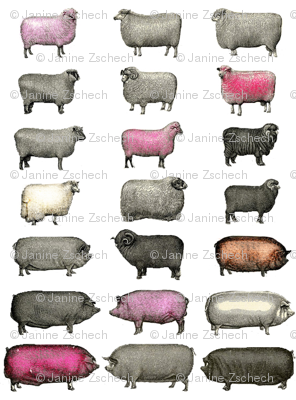 Sheep and Pigs Small