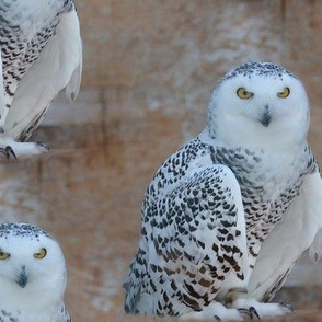 the snowy owl - xl - potter's world