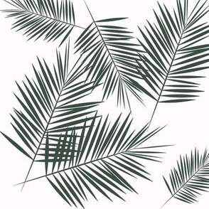 palm leaves - dark green on white fern leaf palm tree tropical || by sunny afternoon