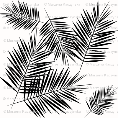 Palm leaf  - black and white monochrome palm leaves palm tree tropical summer beach || by sunny afternoon