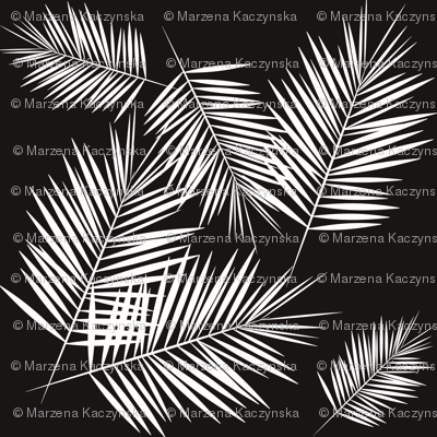 palm leaves - monochrome black and white palm tree fern tropical summer