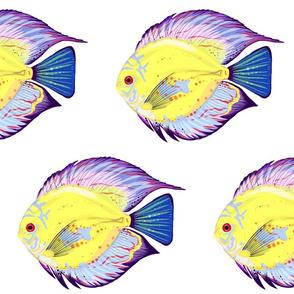 Eclipse: Yellow Fish