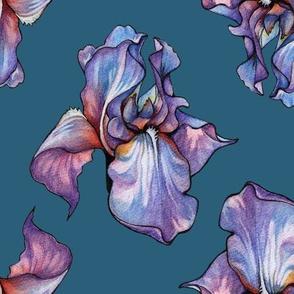 Iris 2 ( Jade Iris )