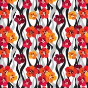 Nasturtiums Red
