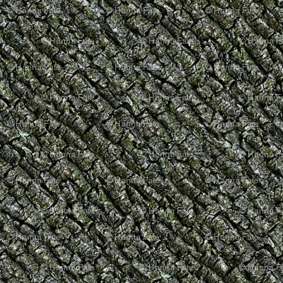 Elm tree bark