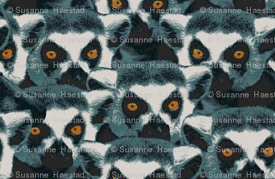 Lemurs watching