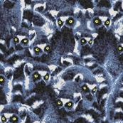 blue_lemurs