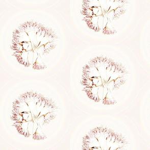Flowering Gum Pink