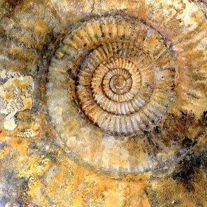 Golden Fossil Ammonite Shell