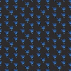 Tiny Blue Wrens