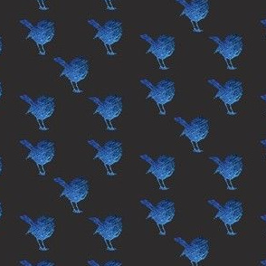 Mid Blue Wrens