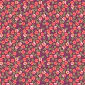 abricot_XS