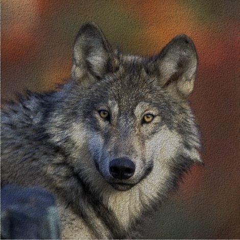 Rrtimberwolf_2_shop_preview