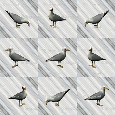 Seagulls on Gray