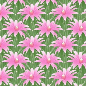 cactus_flower_pink