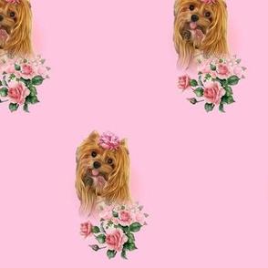 Yorkie pink roses
